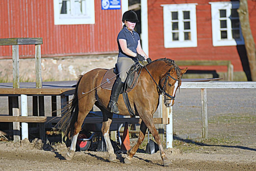 Husössä on osaavat hevoset ja ponit, jotka sopivat ratsastuskouluun.
