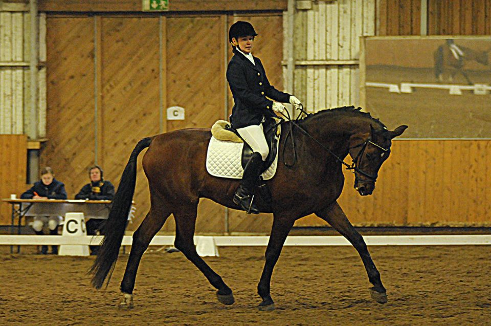 Hevosemme ovat hyvin koulutettuja ja laadukkaita