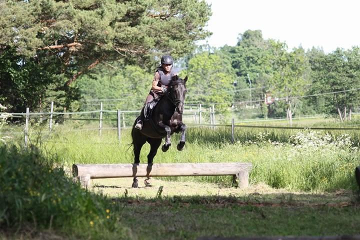 Hyvin koulutetuilla hevosilla on kiva ratsastaa