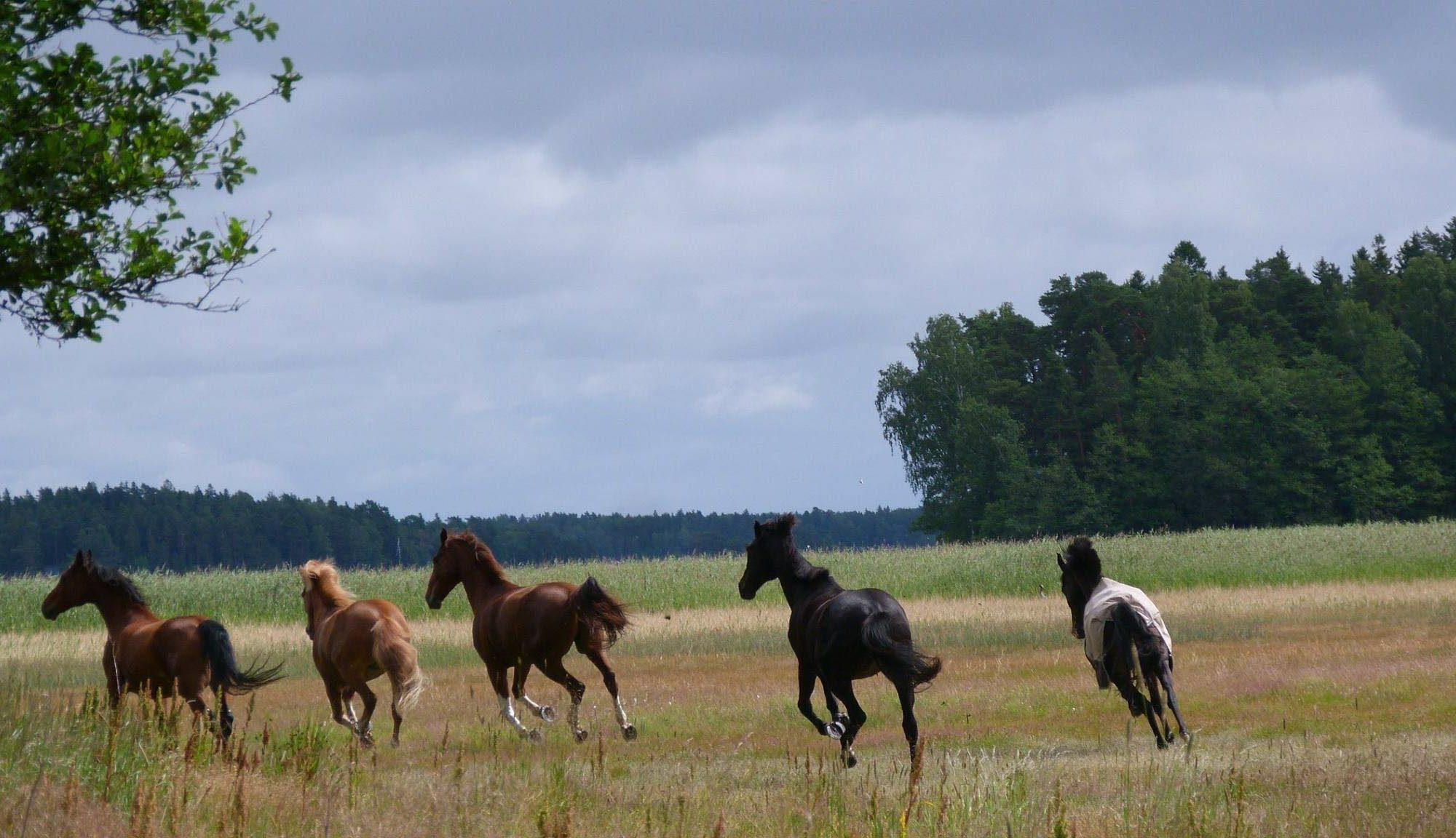 Hevosten hyvinvointi on meille tärkeää
