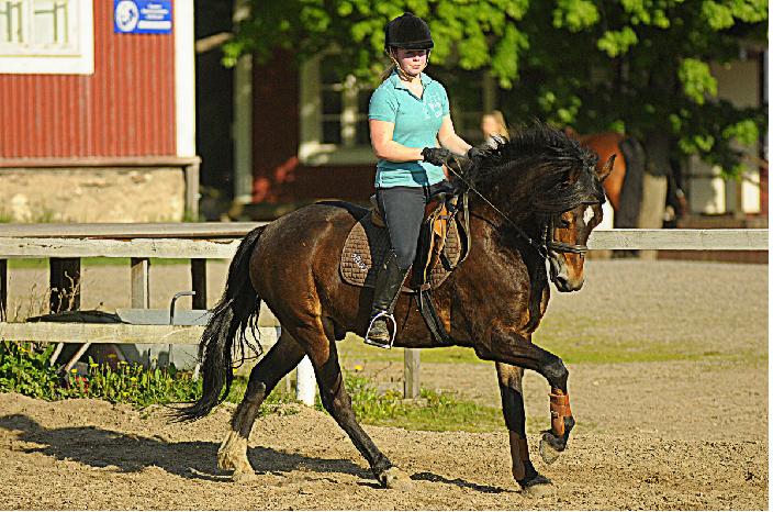Ratsastuskoulussa ratsastustunilla ponilla, Helsinki Uusimaa.