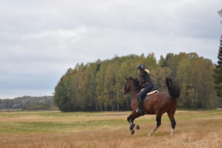 Husössä pääset ratsastamaan hevosilla maastossa ja pienryhmissä