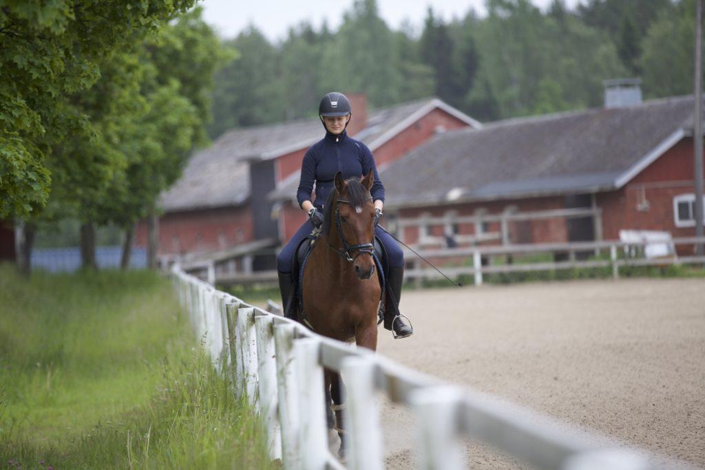 Ratsastuskoulun_hevonen_ratsastustunnilla_isolla_tallilla_helsingissä