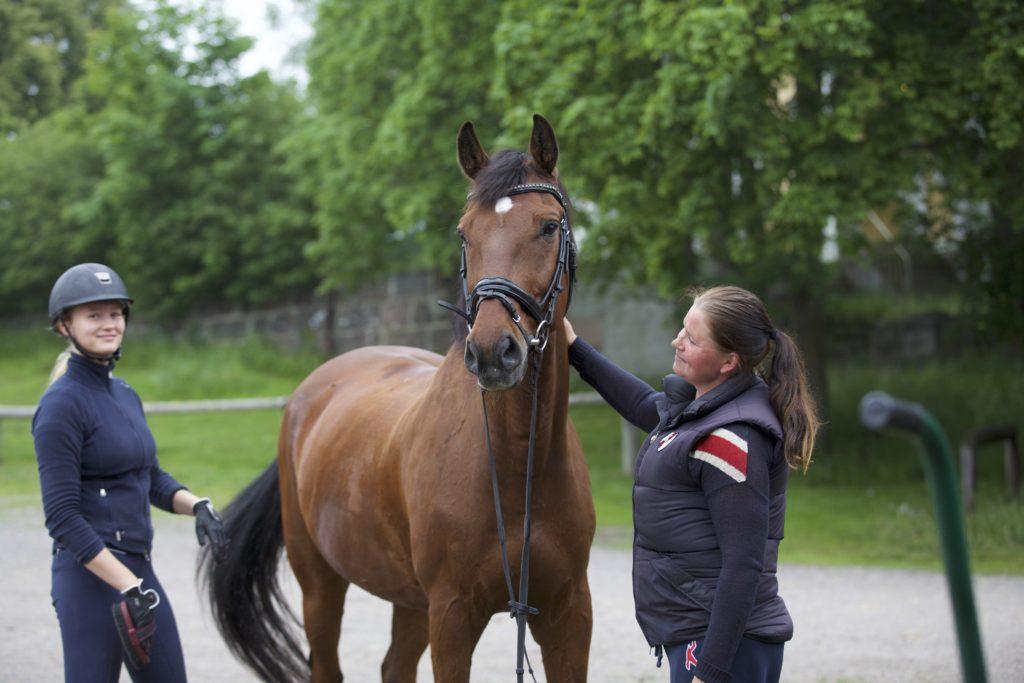 Husön tallilla voit saada hoitohevosen. Ratsastuskoulun opetushevosilla on hoitajat, silti ratsastajat saavat itse hoitaa ratsunsa ratsastustunnille.