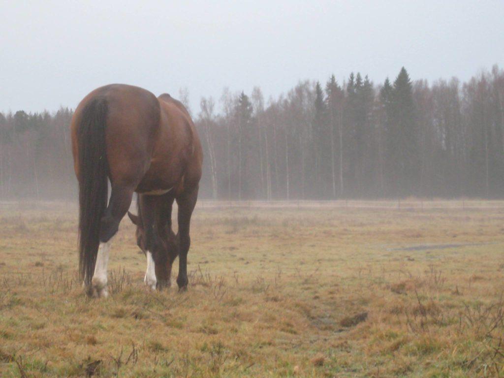 Husössä Helsingissä järjestetään hevosavusteista toimintaa.