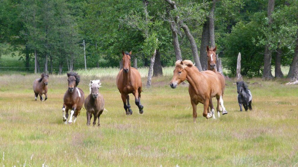 Helsingissä Husön Ratsastuskeskuksessa on myös erityisryhmien ratsastusta.