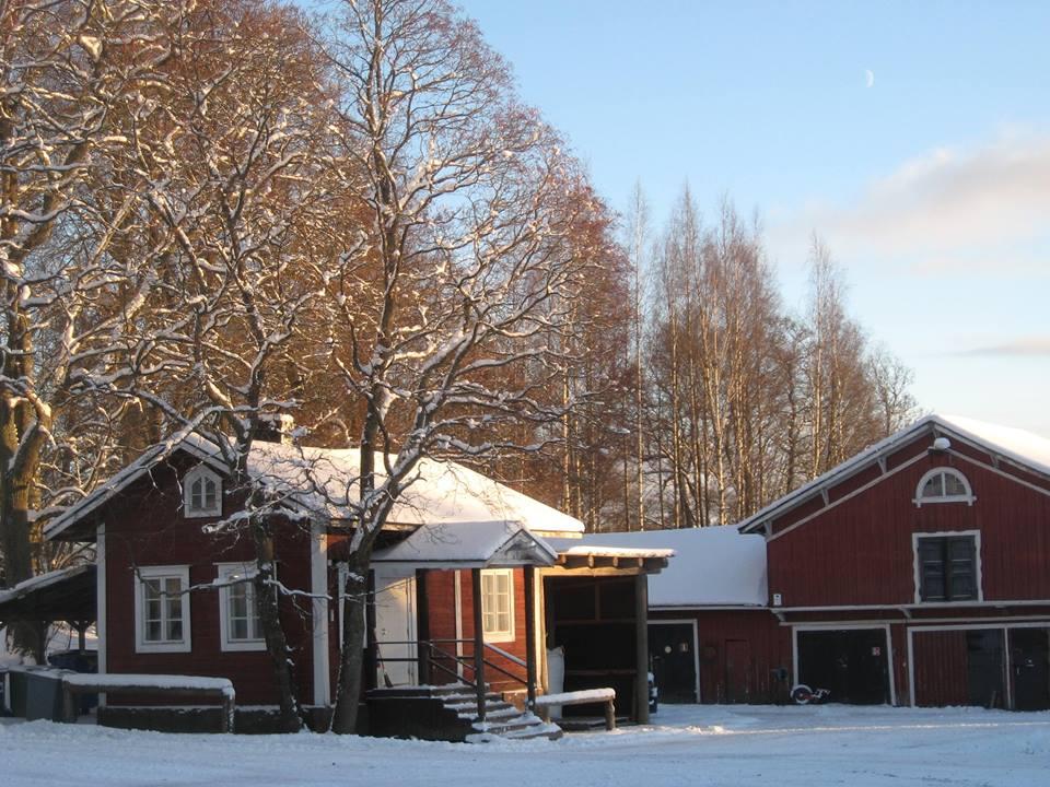 Husön ratsastuskoululla on monta tallirakennusta ja paljon hevosia sekä poneja.