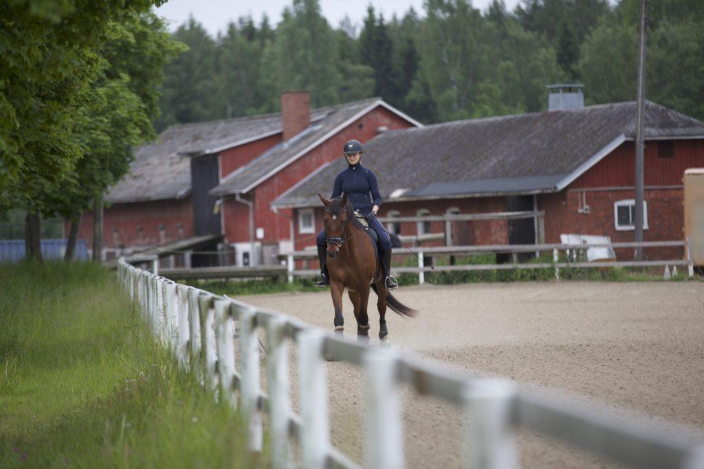 Hevonen ja ratsastaja ratsastustunnilla Husössä pk-seudulla Helsingissä.