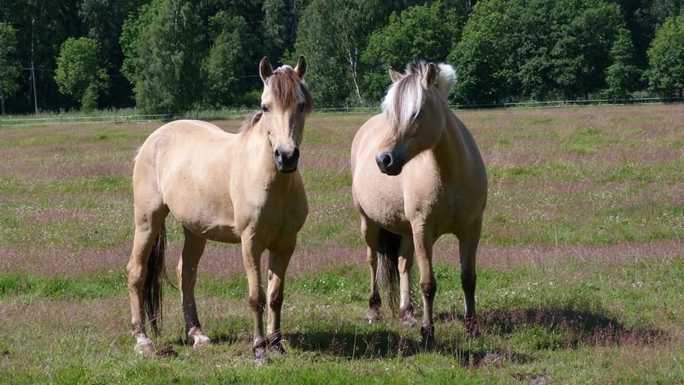 Syyskauden ratsastustunnit ovat nyt varattavissa Hopotista! Husön Ratsastuskoulu sijaitsee pääkaupunkiseudulla Helsingissä.